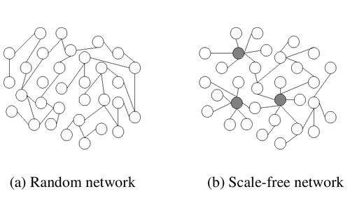 scale free network
