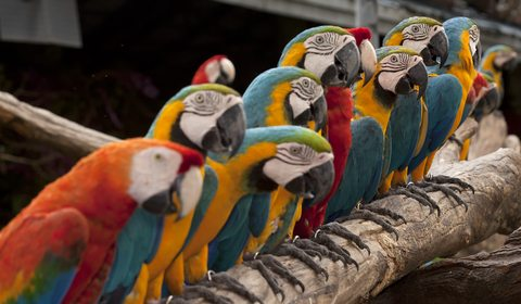 Parrots lining up. That's a joke.